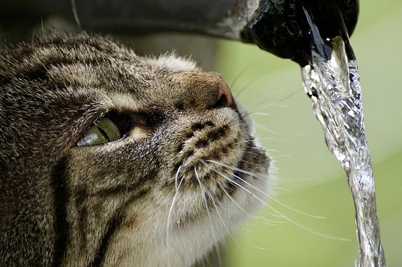 Jaka woda jest najlepsza dla mojego kota?