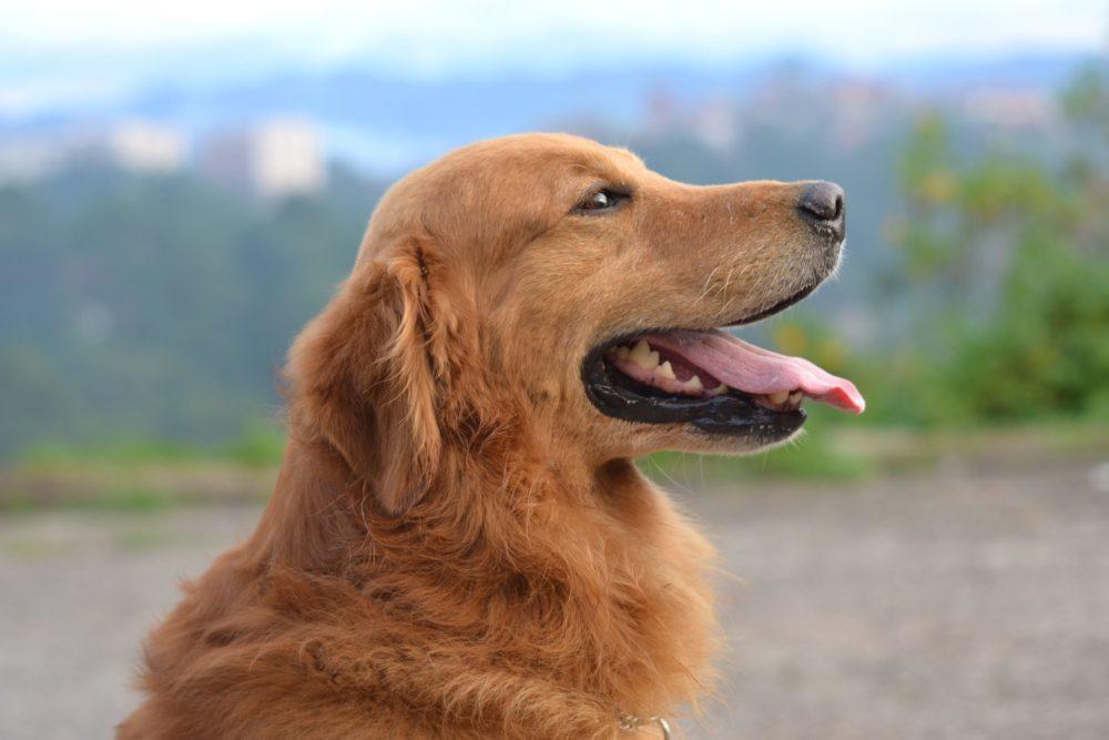 białko w diecie psa
