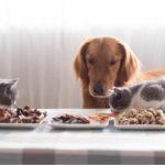 strawność w diecie psa i kota