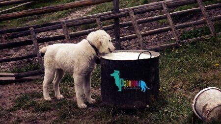 Porównanie metod żywienia psów - karmy suche, surowe i gotowane Psorbona